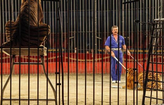 Cuatro tigres devoran a un domador de circo en pleno ensayo