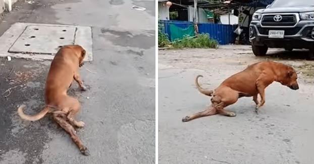 Una perra finge tener la pata rota para dar lástima y conseguir que le den comida