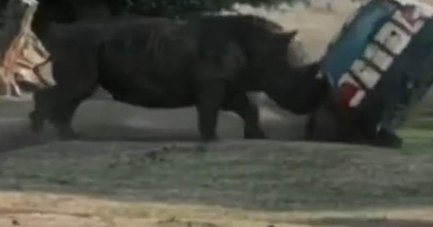 Un rinoceronte de un safari park alemán destroza un coche con el cuidador dentro