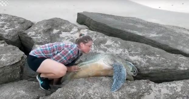 Esta pareja salva a una tortuga que se quedó atrapada entre dos grandes rocas a la orilla del mar