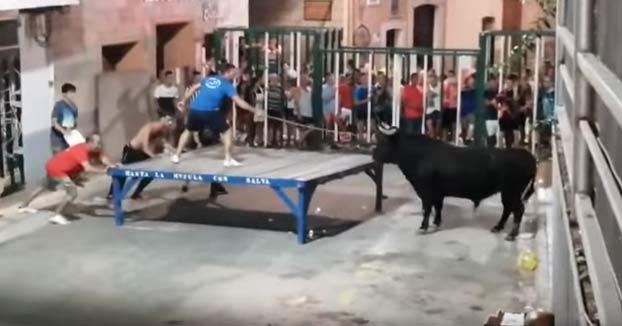 Un toro embiste y lanza por los aires a un hombre en Calpe