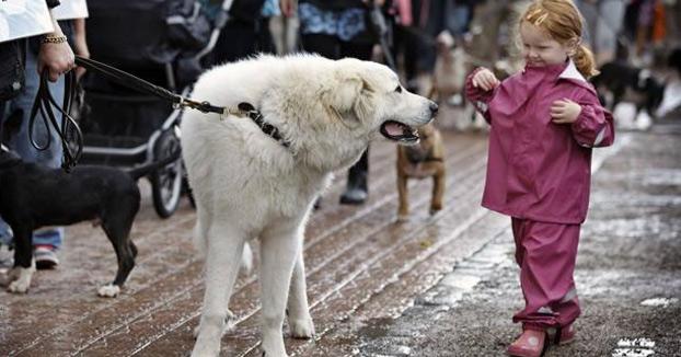 Un colegio de Granada impartirá una asignatura sobre protección animal