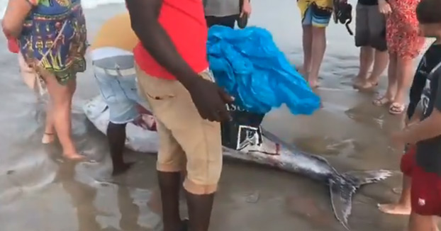 Aparece un atún varado en una playa de La Manga y lo cortan en filetes para llevárselo