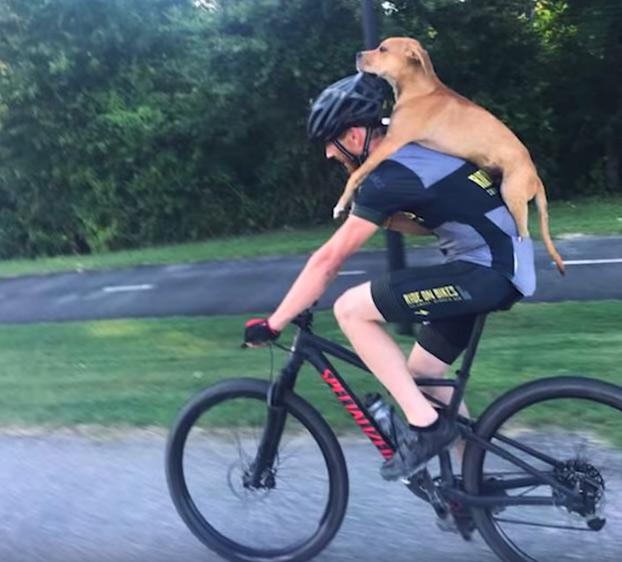 Un ciclista encuentra a un perro herido en el bosque y se lo lleva cargándoselo a la espalda
