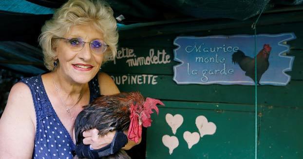 Un juez francés desestima la denuncia contra el gallo Maurice por cantar demasiado temprano