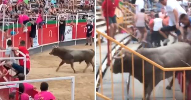 Un toro salta a las gradas en el correbous de Vidreres y deja más de 20 heridos