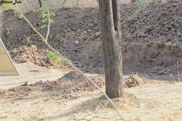 ¿Puedes encontrar al leopardo en esta imagen?