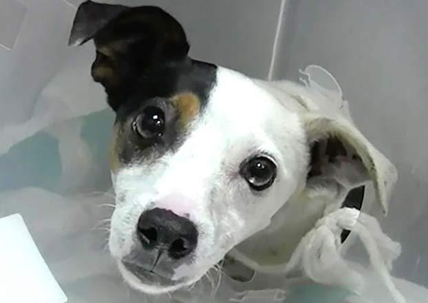 Condenan a un cazador a cinco meses de prisión por disparar a un perro que paseaba con sus dueños