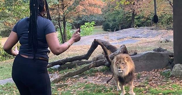 Una mujer entra en el recinto de un león en el zoo y se pone a bailar al lado del animal