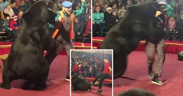 Un oso de circo ataca a su entrenador durante una actuación