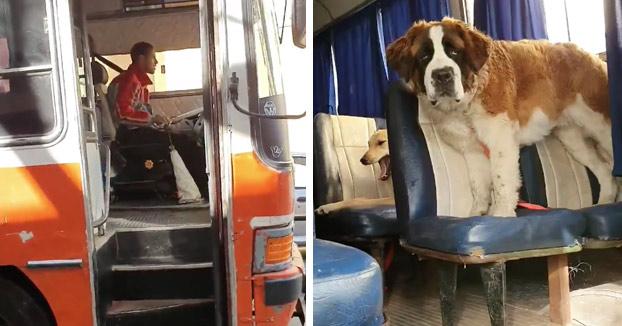 León Darío, el paseador de perros que lleva a los animales en un autobús escolar