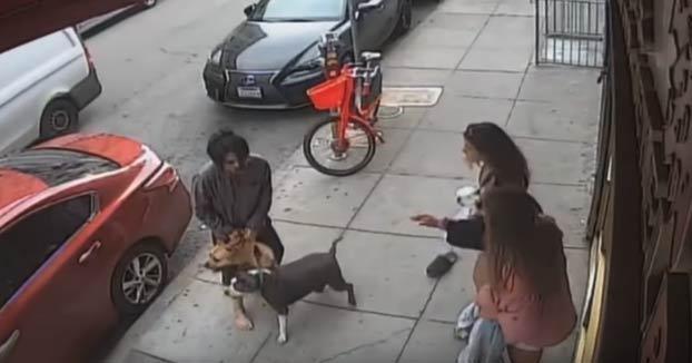 Dos perros atacan a otro más pequeño en plena calle de San Francisco