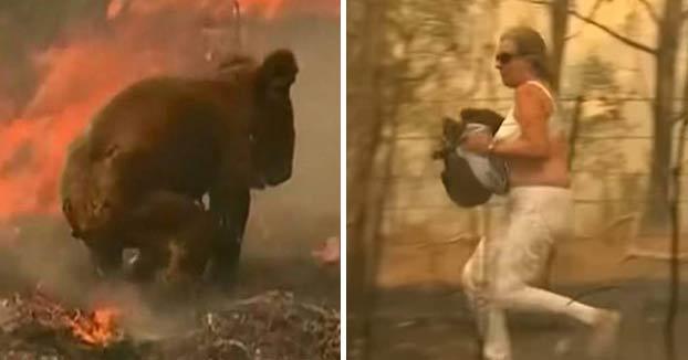 Esta mujer salva a un koala de 14 años de un incendio forestal en Australia