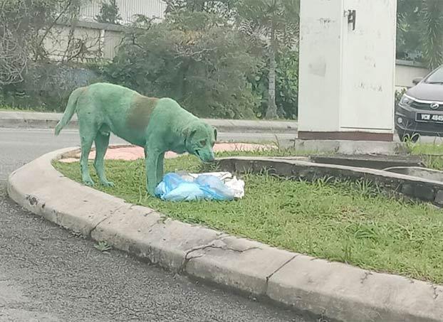 Encuentran un perro pintado de verde, llorando y buscando comida en la calle