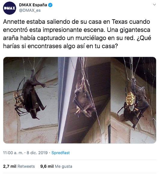 ''Annette estaba saliendo de su casa en Texas cuando encontró esta impresionante escena...''
