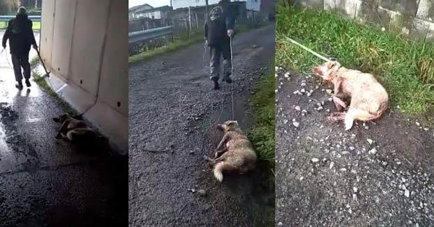 Un cazador dispara, golpea y arrastra a su perra: ''Disparo a quien me sale de los cojones''