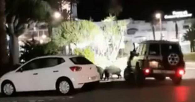 El SEPRONA busca a un joven en Mojácar que embistió a varios jabalíes con su coche. Se enfrenta a una multa de hasta 30.000 euros