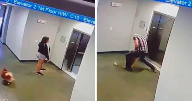 Salva a un perro atado que no llegó a entrar al ascensor con su dueña