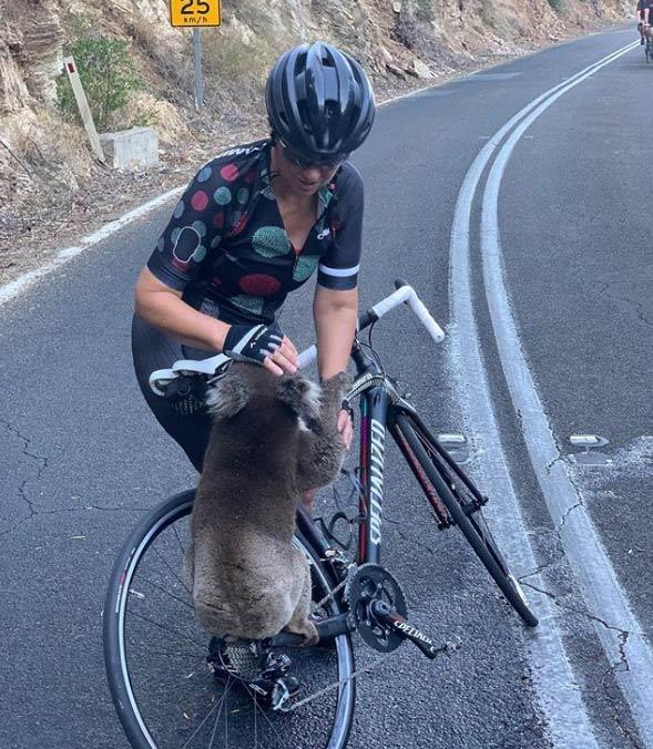 Un koala para a un grupo de ciclistas y les pide agua en plena ola de calor en Australia