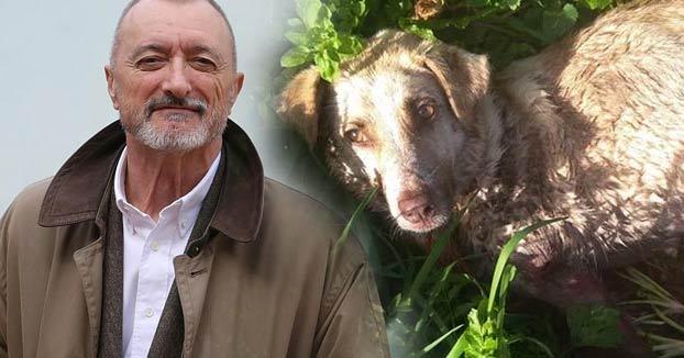 Pérez-Reverte se hace una pregunta sobre el cazador que tiroteó a su perra en Chantada