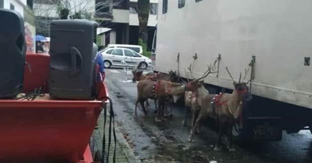 Indignación entre los vecinos de Ourense por utilizar renos en el desfile de Papa Noel