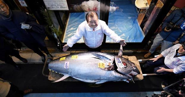 El 'rey del atún' gana una subasta al pagar 1,8 millones de dólares por un ejemplar de 276 kilos