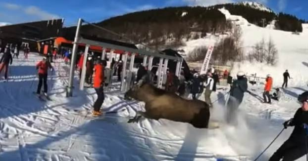 Susto en una estación de esquí de Suecia: Un alce corriendo a toda velocidad entre los esquiadores