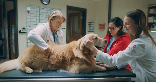 Compra un anuncio de la Super Bowl por 6 millones en agradecimiento a los veterinarios que salvaron a su perro