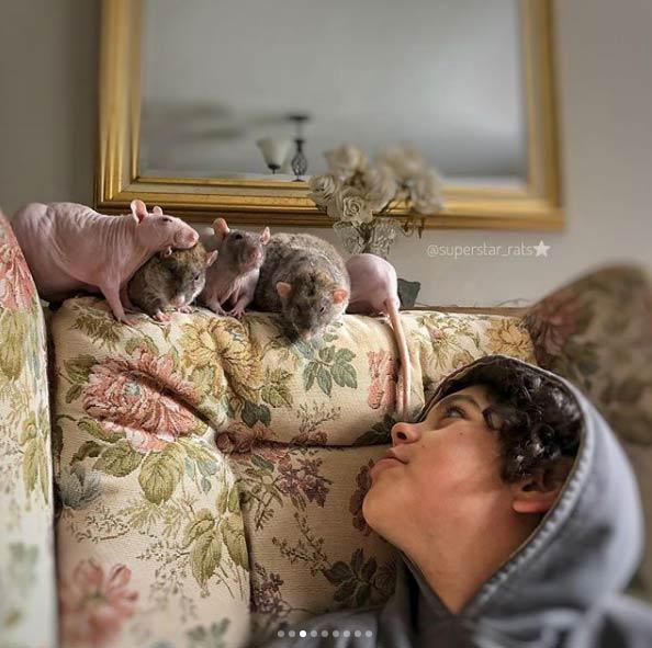 La familia que no puede parar de adoptar ratas