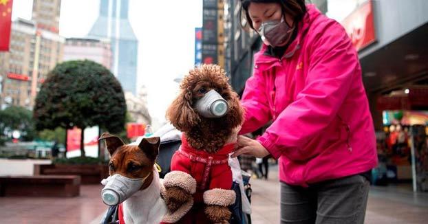 El perro de un mujer contagiada por coronavirus, en cuarentena