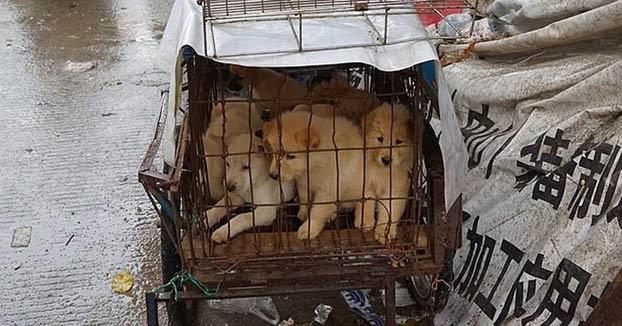 Una ciudad china redacta una ley para prohibir comer perros a raíz del coronavirus