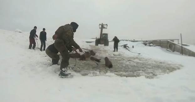 Estos hombres actuaron rápido y consiguieron salvar la vida de unos caballos que cayeron al agua helada en Bashkiria, Rusia