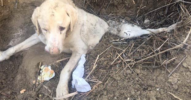 Entierran vivo a un perro en un pueblo de Jaén para que muriera pero alguien lo vio a tiempo
