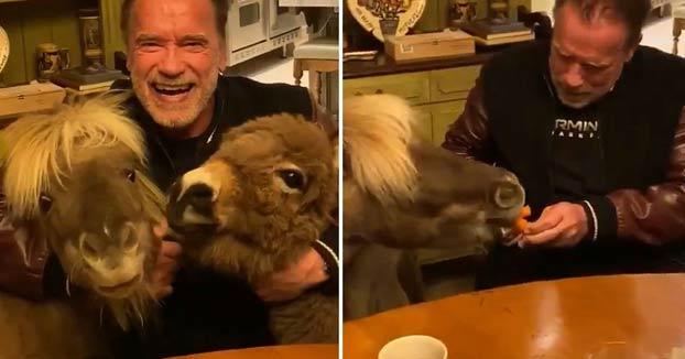 Arnold Schwarzenegger pide a la gente que se quede en casa junto a su burro y su poni