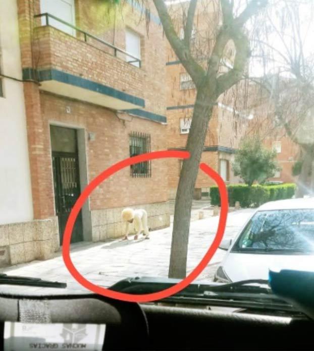 Un hombre se disfraza de perro en Toledo para saltarse el confinamiento