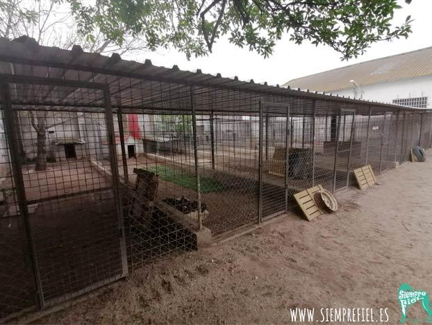 La protectora de animales 'Siempre Fiel' de Salamanca se queda sin perros, todos han sido acogidos