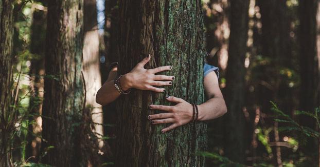 Islandia anima a sus ciudadanos a abrazar árboles para superar el aislamiento social