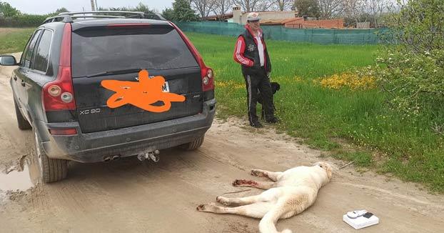 Arrastra a su perro con el coche y lo mata tras saltarse el confinamiento
