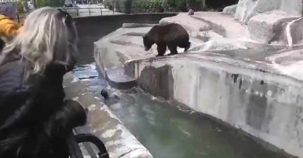 Un hombre borracho entra en el recinto de un oso en un zoo y casi lo acaba ahogando al intentar escapar