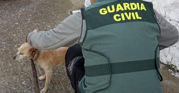 Investigado un hombre de 83 años en Torremocha por atar de forma permanente un palo en el cuello de su perro