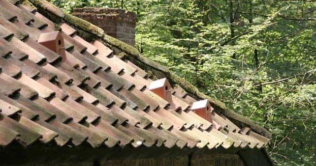 Fabrican tejas-nido para dar refugio a las aves