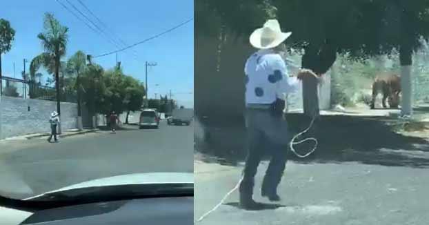 Un hombre con una silla plegable y un vaquero con un lazo intentan atrapar a un tigre suelto en una calle de México