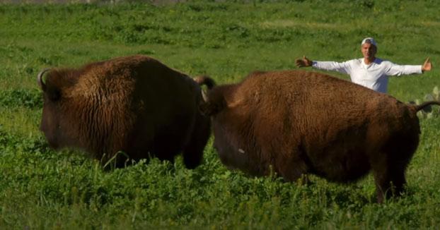 Frank Cuesta viaja a la Isla de Santa Catalina, una isla a 35 km de Los Ángeles donde viven bisontes americanos en libertad