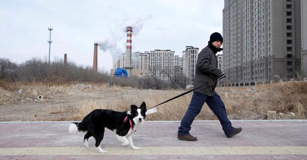China prohíbe criar perros y gatos para el consumo humano