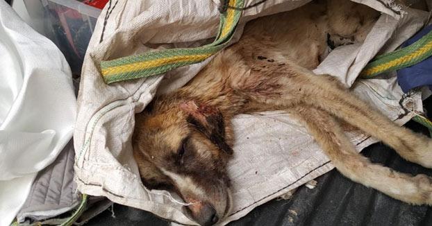 Rescatan a un perro que arrojaron vivo a la basura dentro de un saco de escombros