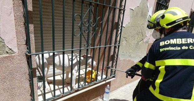 Dejan a un perro dogo argentino al sol atrapado entre la persiana y la reja de la ventana en una casa de Jerez
