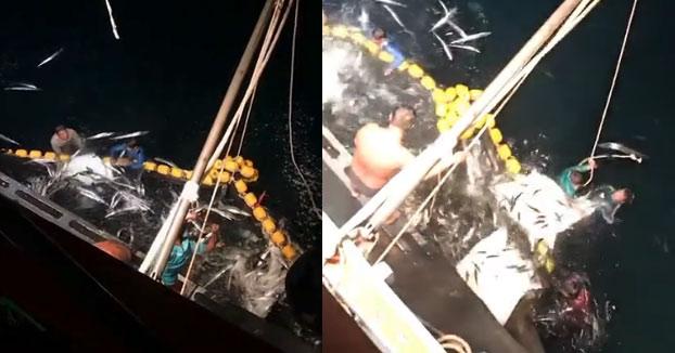 Unos pescadores liberan 30 mantas raya atrapadas en la red de arrastre en Tailandia