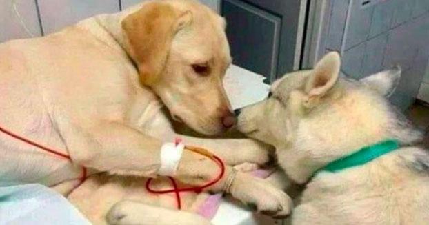 El perro de un veterinario que ayuda a los demás pacientes a calmarse ha desatado ternura y humor en Twitter