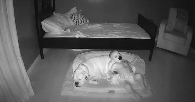 Cada noche este niño se baja de su cama para acurrucarse y dormir en la cama de su perro