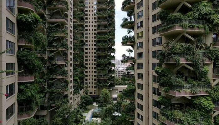 Los ''bosques verticales'' de China se convierten en una jungla infestada de mosquitos
